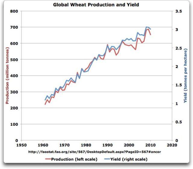 globalwheatproductionandyield